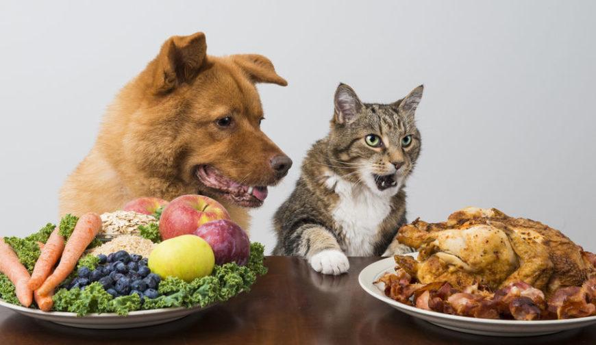 Alimenti-vegani-per-cani-e-gatti.jpg